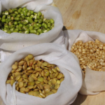 Mung bean, lentil & wheat berry sprouts