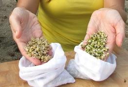 Fresh Lentil & Mung Bean Sprouts