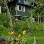 My friend's amazing farm in Maui, HI