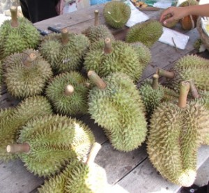 The Durian Fruit, a favorite amongst Raw Foodists