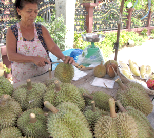 Local, Organic Tropical Fruit - Durian!