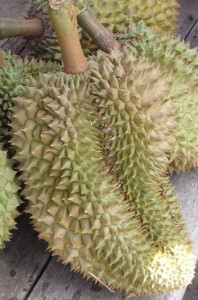 Durian: smells bad but tastes great?